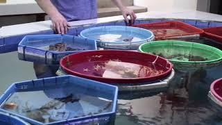 RWS fish world. Интернет магазин REEF EXCLUSIVE