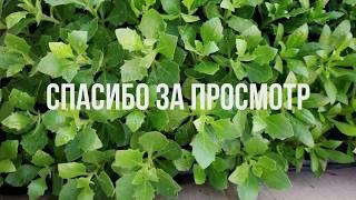 Карантин. Луганская область. Магазин Огородник закрыт из-за коронавируса. Работаем через интернет.