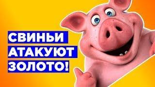 Инвестиции в ЗОЛОТО - свиньи нападают и выигрывают?!