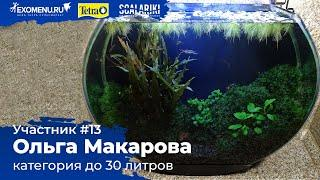 Аквариум 28 л Участник №13 в категории до 30 литров #Scalariki Aquascaping Contest 2021