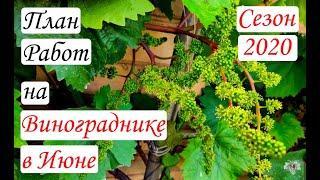 План работ на винограднике в Июне. Сезон 2020