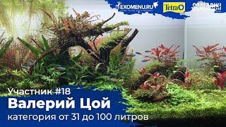 Травник 96 л Участник №18 в категории от 31 до 100 литра #Scalariki Aquascaping Contest 2021