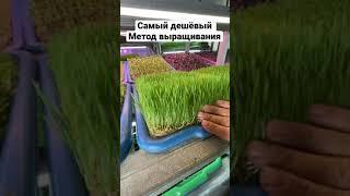 Просто Бизнес = Вода + семена ! Заработок дома Бизнес идеи Ростки Микрогрин ЗОЖ