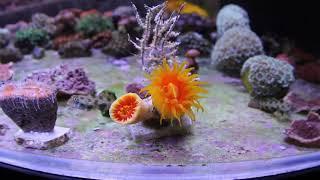 Relax Coral Reef. Интернет магазин REEF EXCLUSIVE