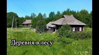 Заброшенная деревня в лесах Ярославской области. Множество брошенных домов