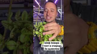 Высокая маржа и спрос микрозелени щавель кровавая Мэри бизнес идея  микрозелень